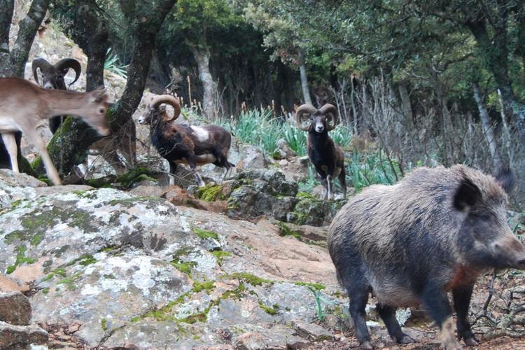 Agriturismo Parco Donnortei